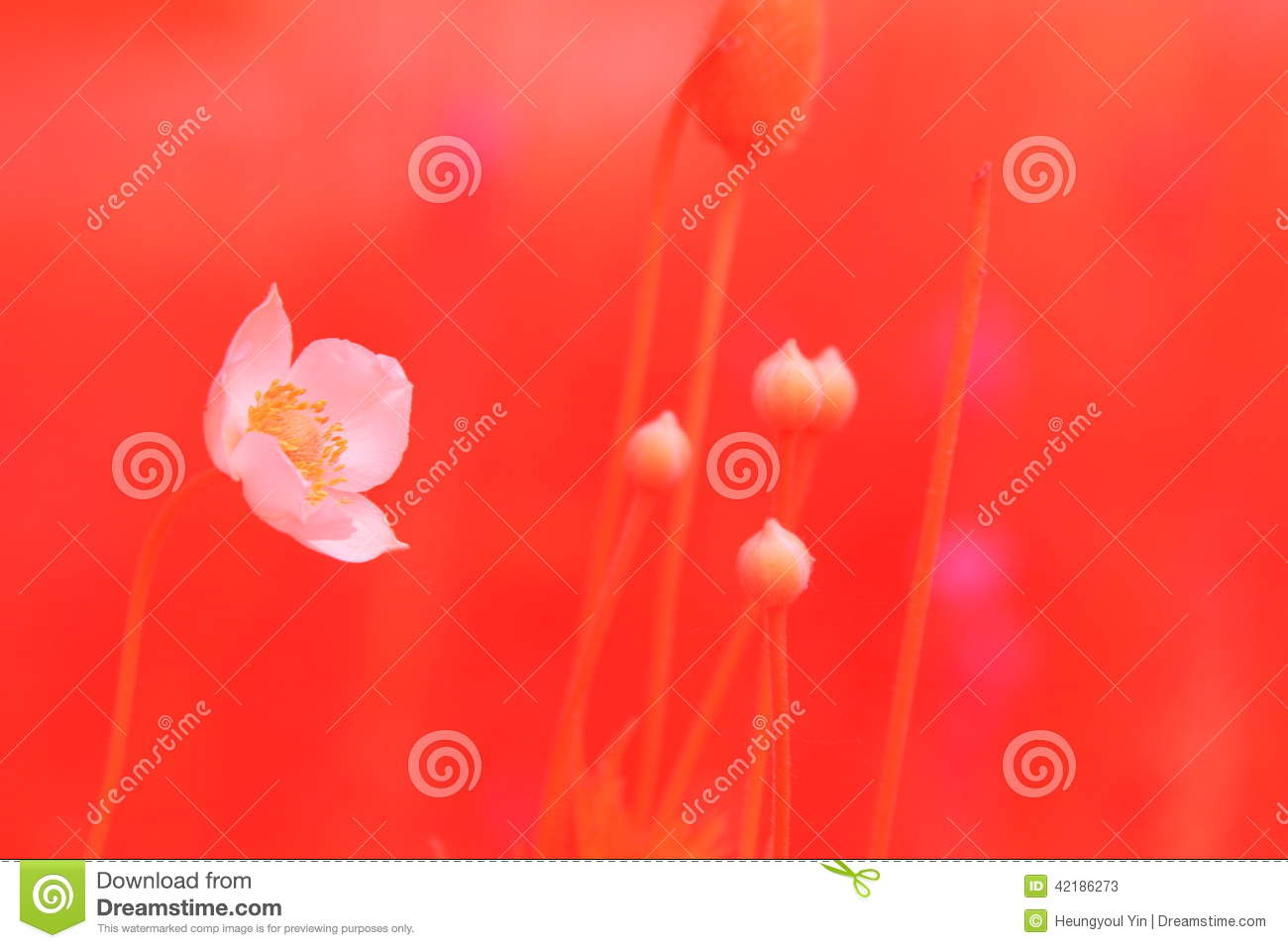 Dreaming flowers stock photo image 42186273 - Dreaming about the color red ...