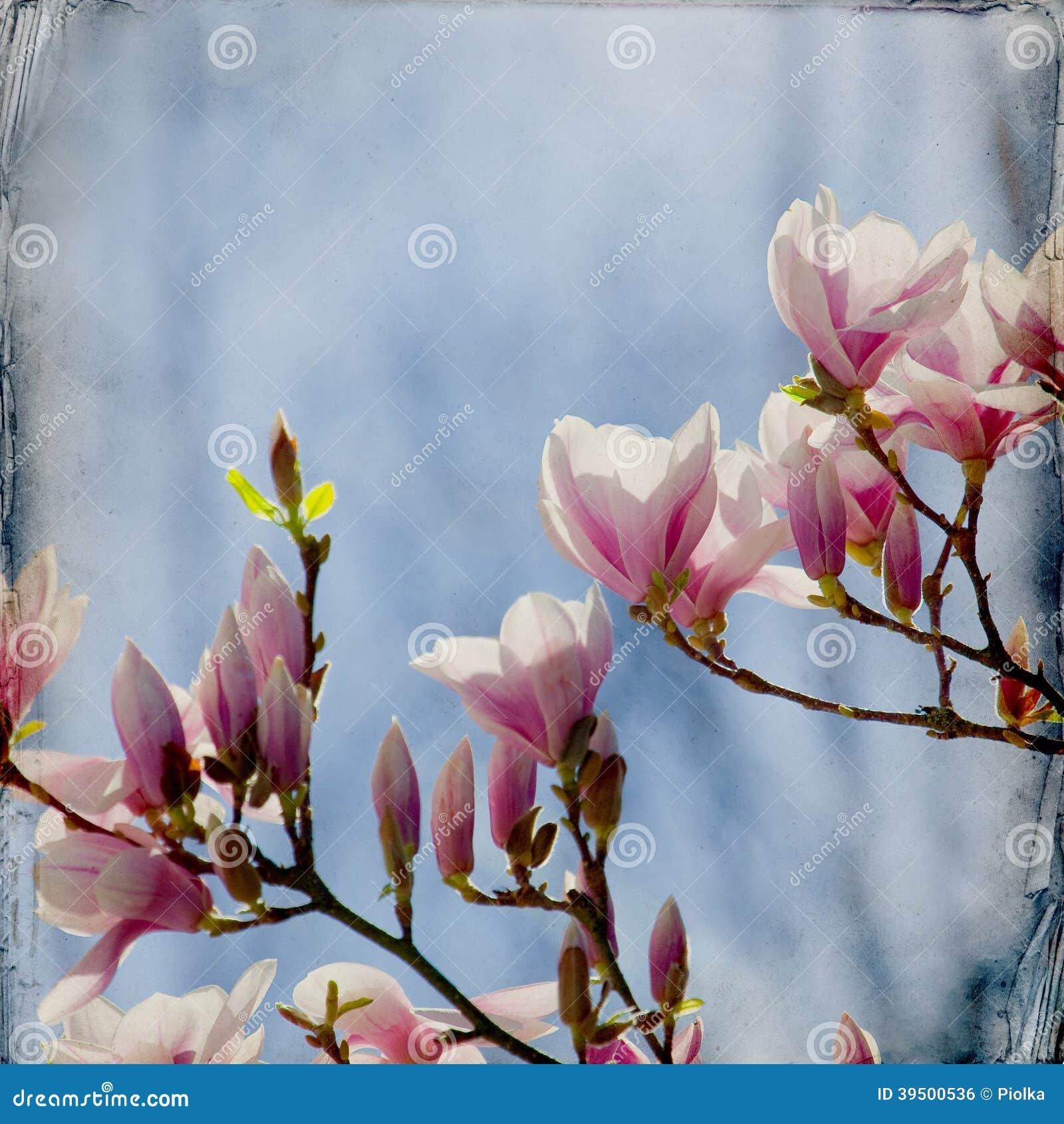 Dreamy magnolia background