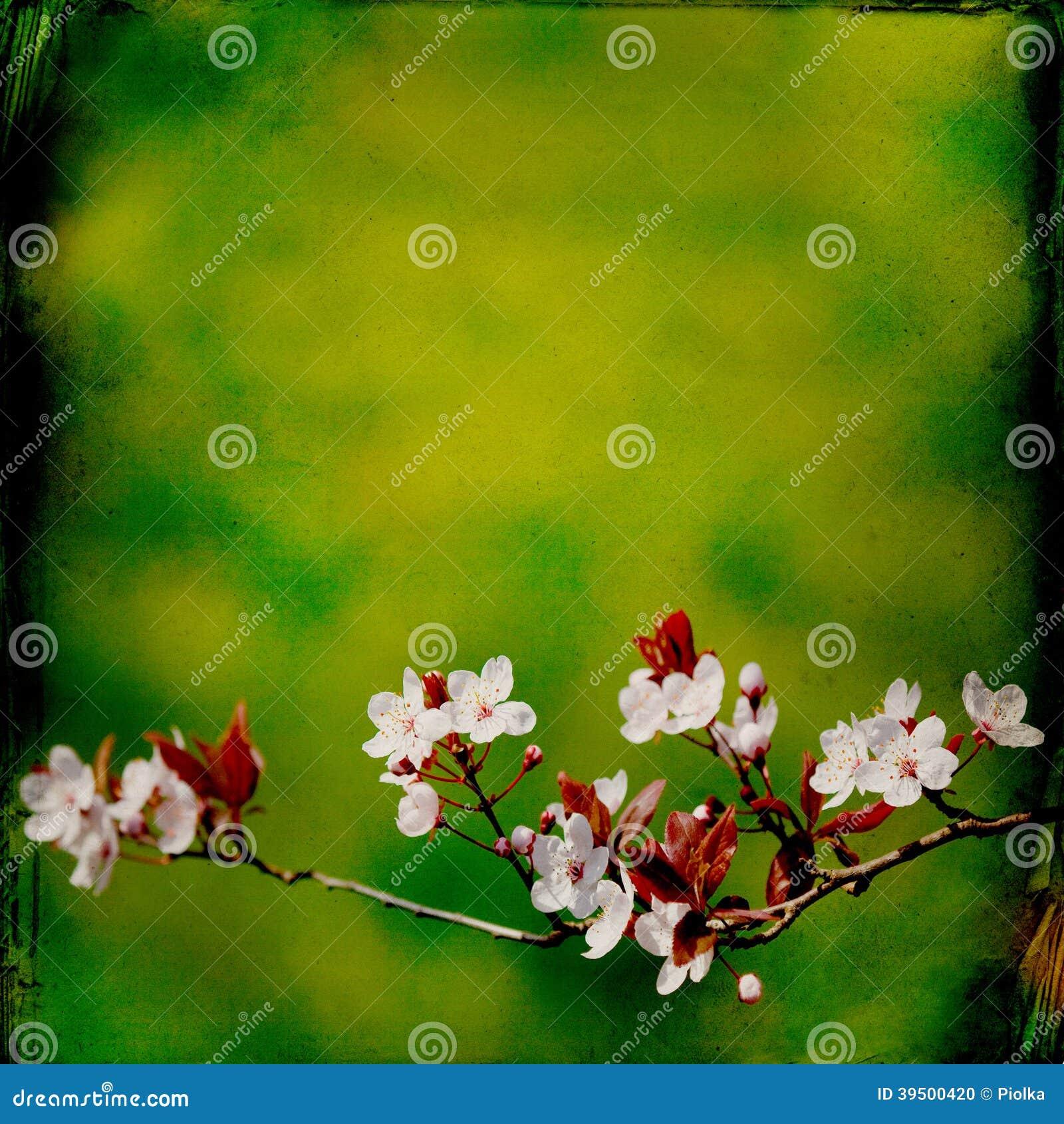 Dreamy springflowers background
