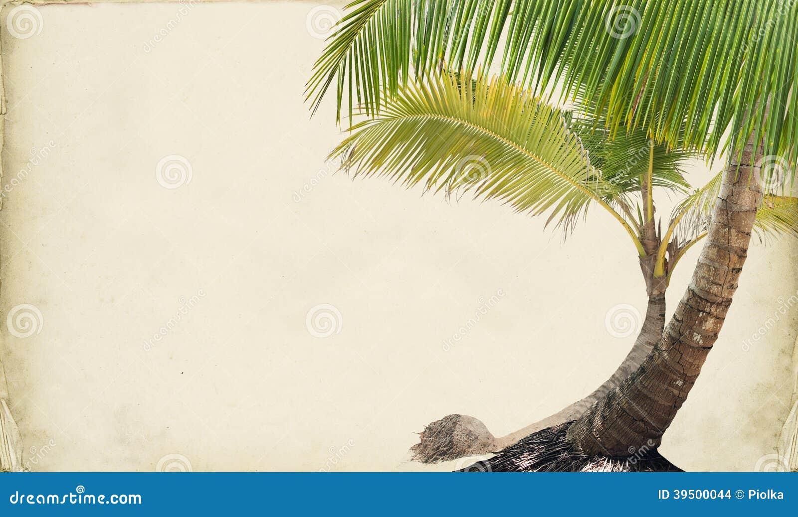 Drean Beach Paper Background