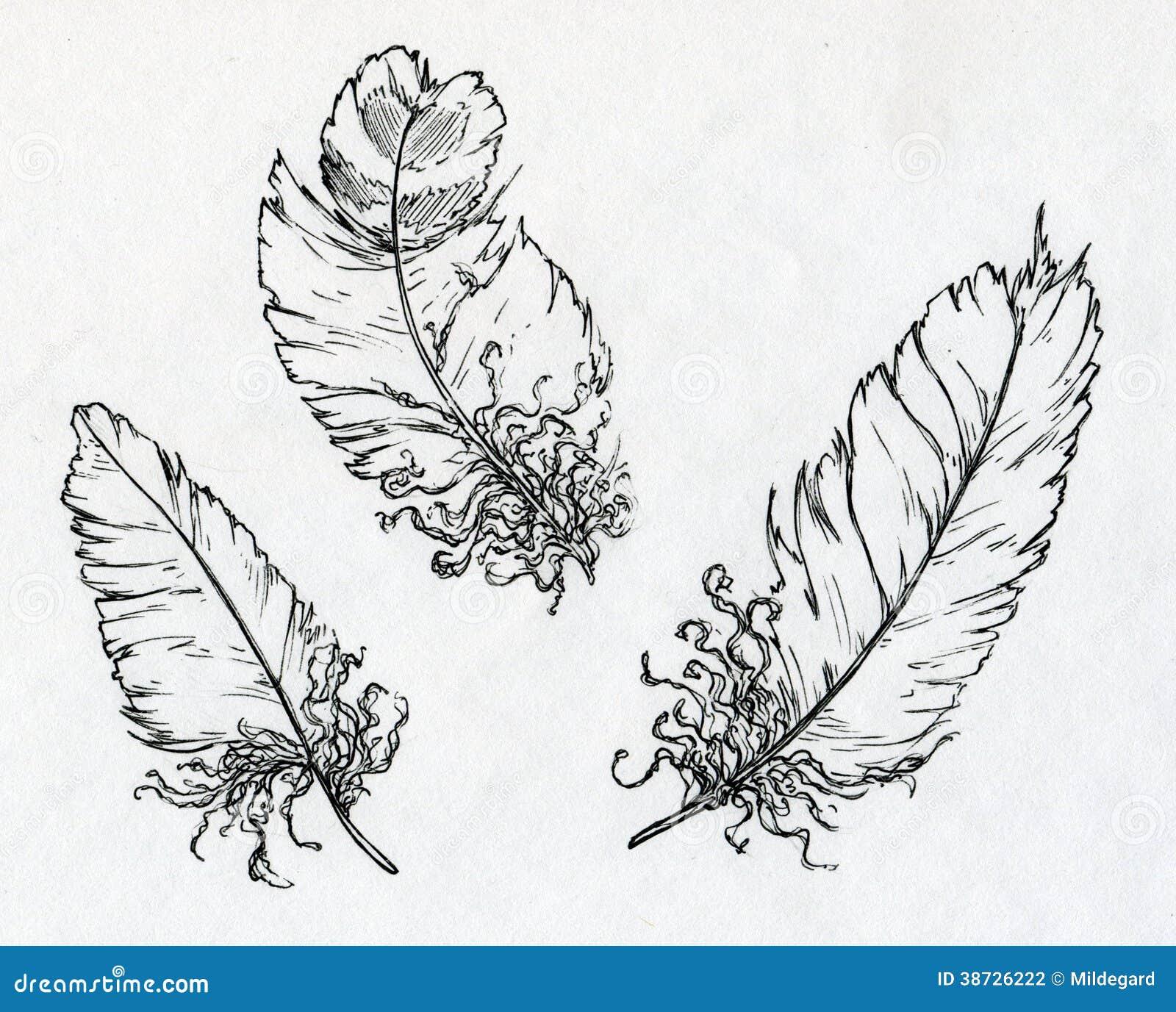 Drei Federn