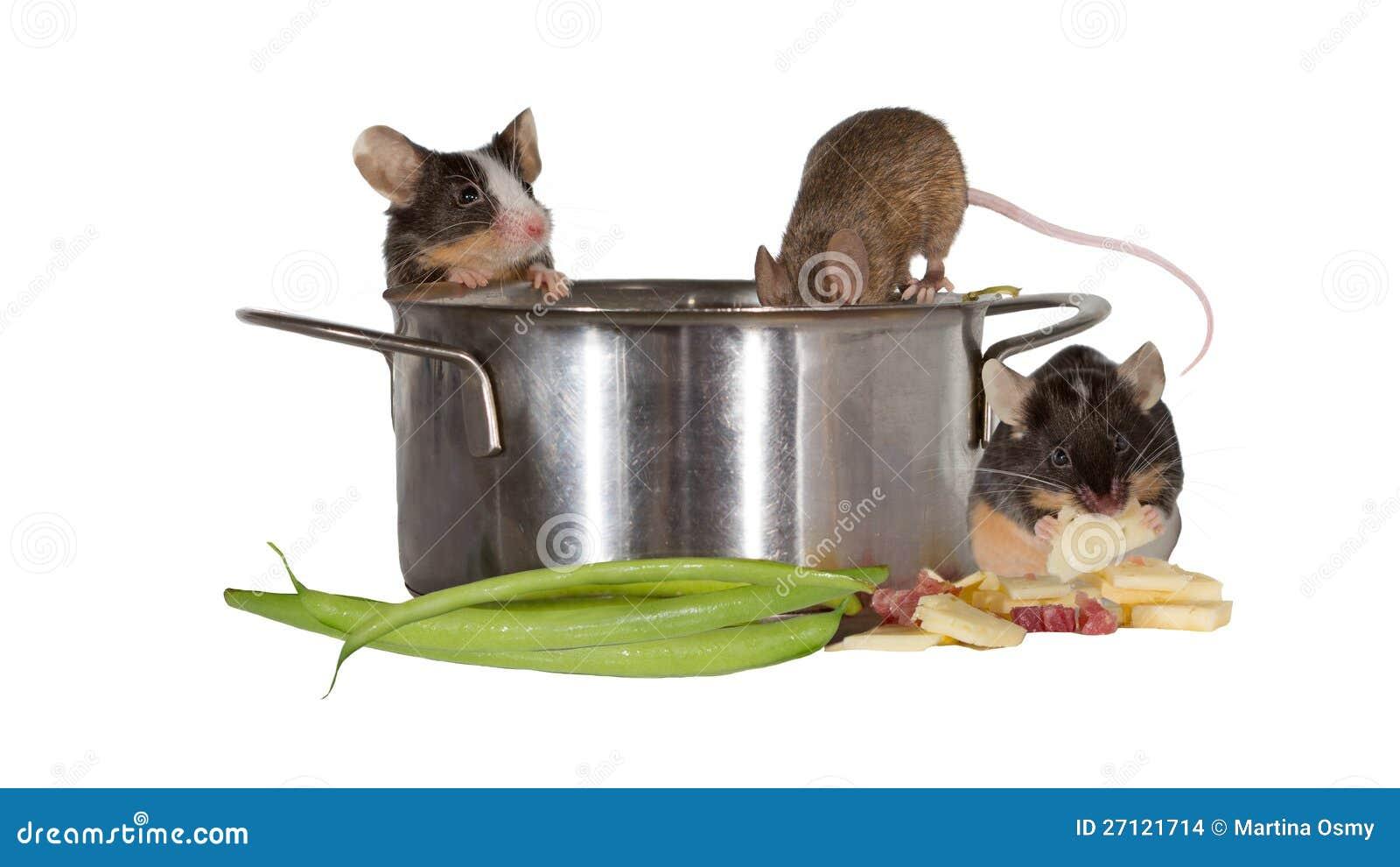 Gemütlich Mäuse Die Drähte Essen Ideen - Der Schaltplan - triangre.info