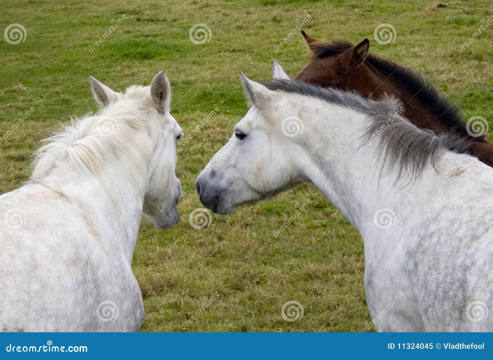 Drei Pferde, die zusammen sprechen
