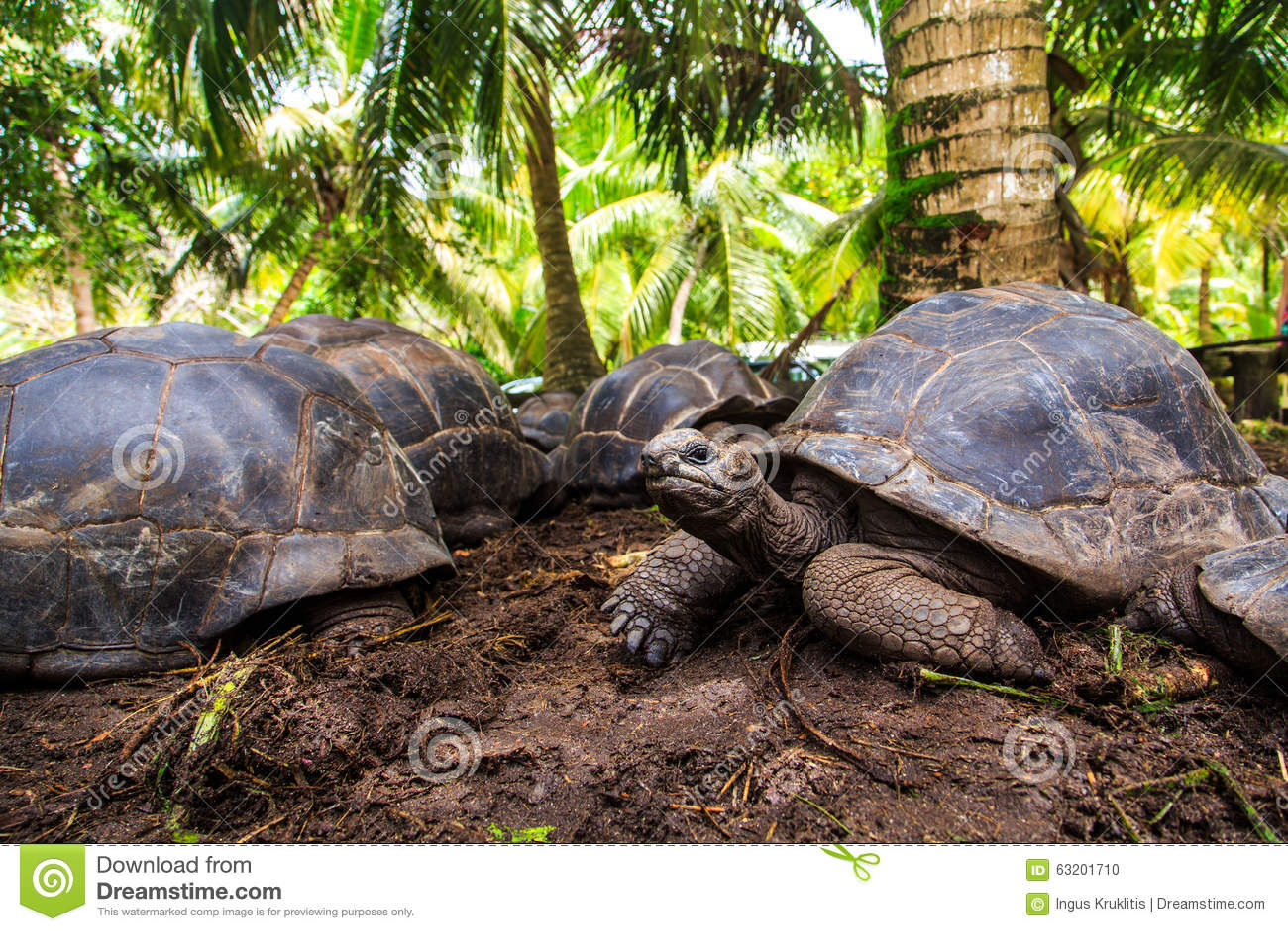 Drei riesige Schildkröten