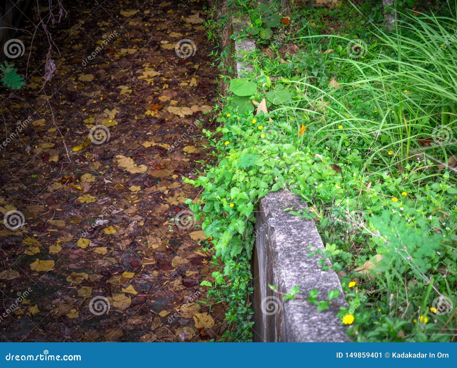 Drenaje de los bosques secos 01
