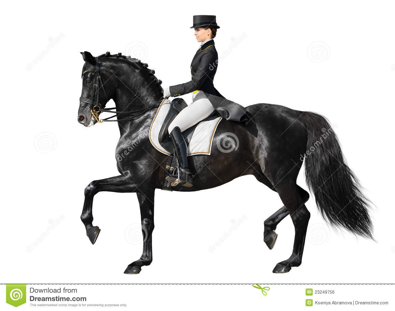 Dressage Black Horse And Woman Stock Photo Image Of Rider Horizontal 23249756