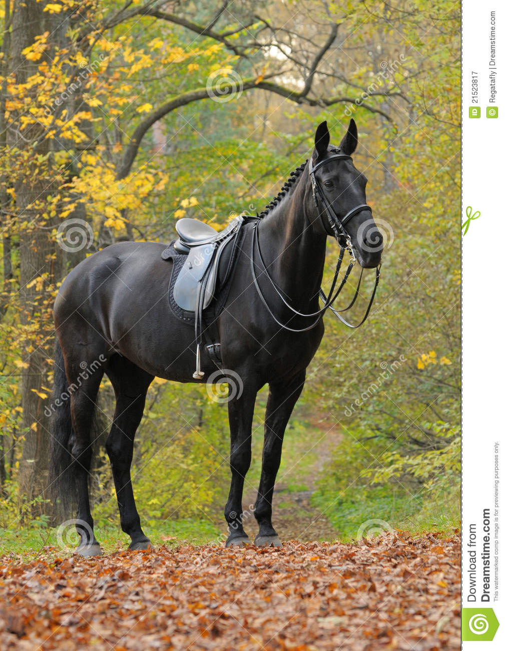Dressage Black Horse In Wood Stock Image Image Of Park Color 21523817