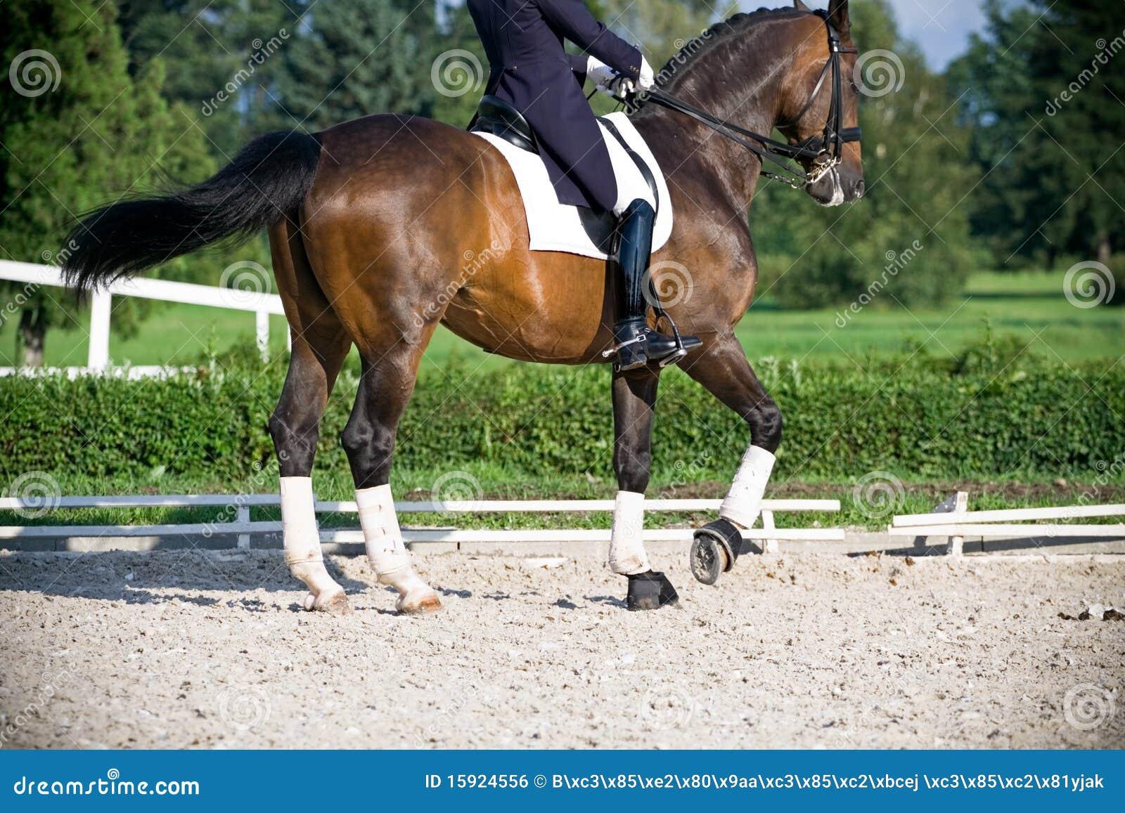 Dressage del caballo