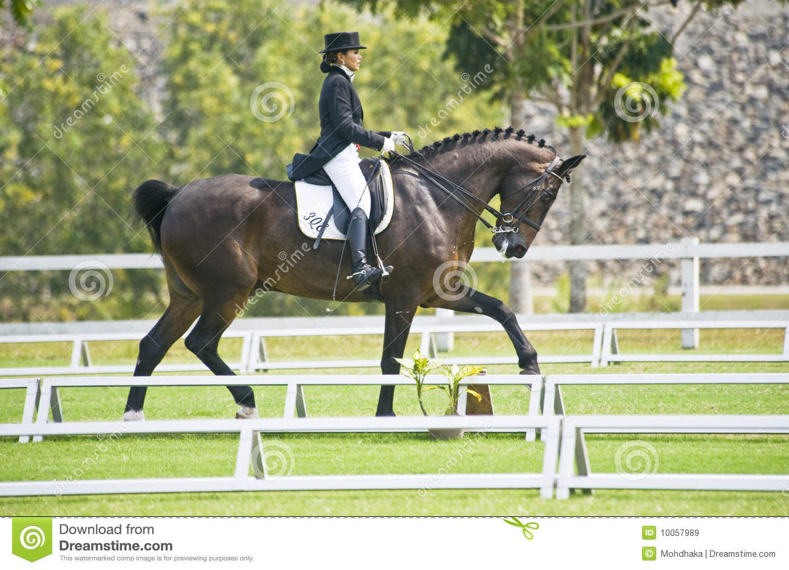 Dressage equestre