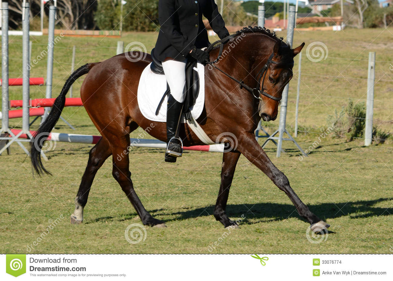 Show Jumping Horse Stock Photo Image Of Equestrian Herbivorous 33076774