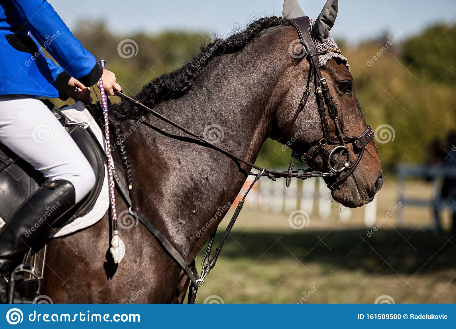Dressage Horse And A Rider Stock Photo Image Of Heavy 161509500