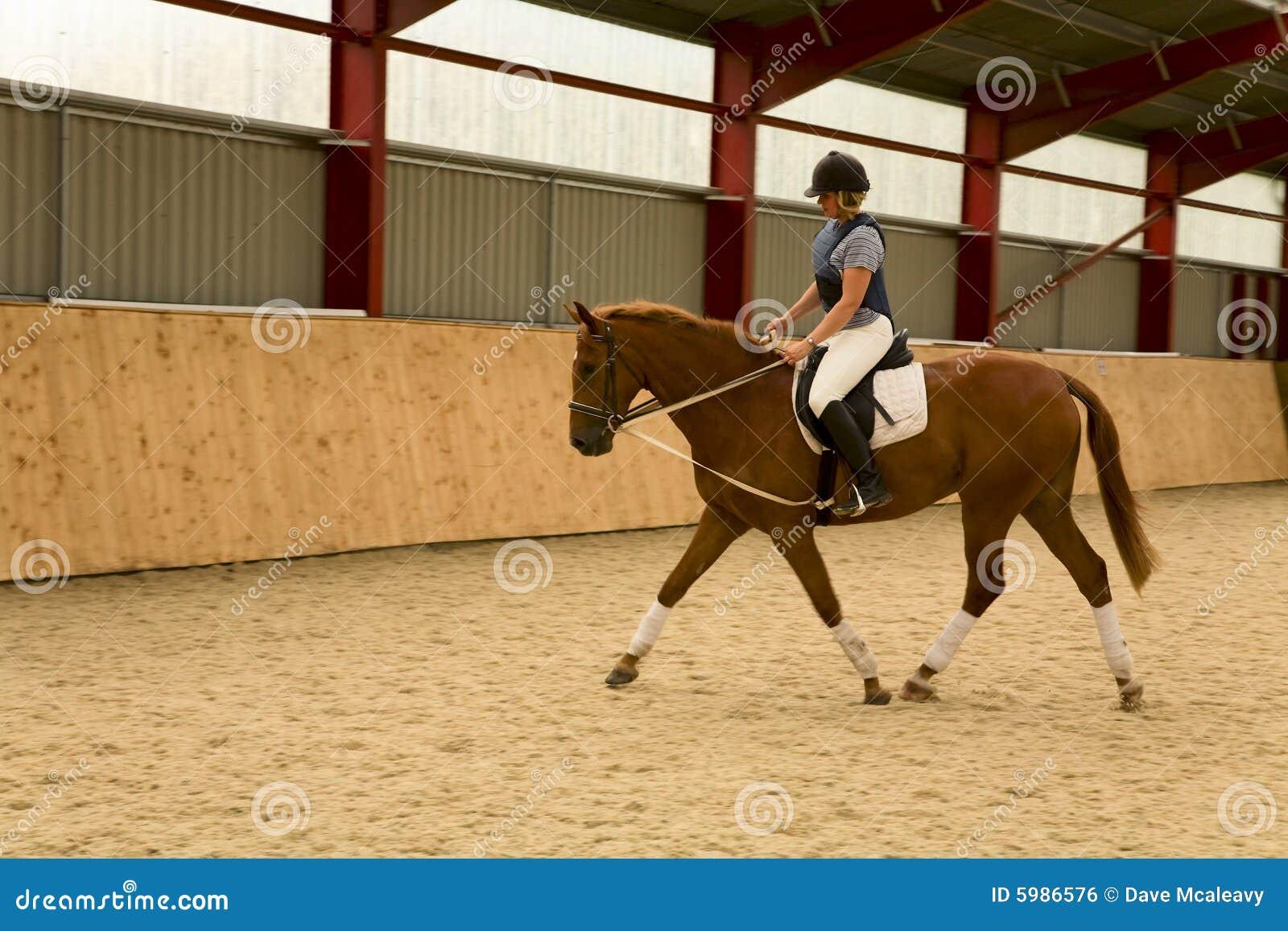 Dressage konia