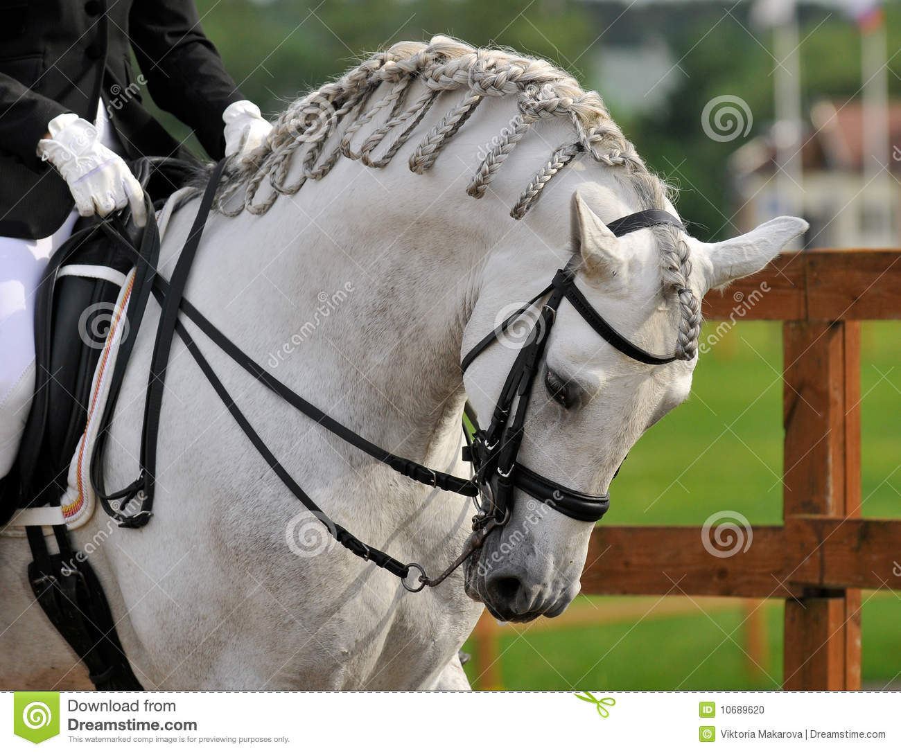 Dressage Pura Raza Espanola Andalusian Horse Stock Photo