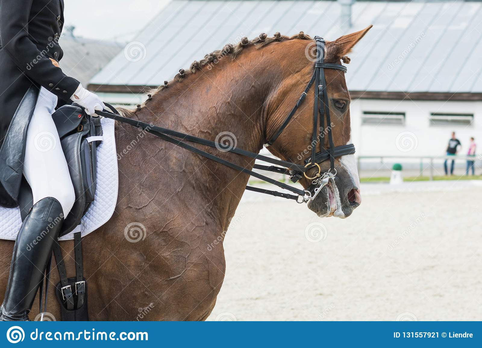 Dressage Rider On A Brown Horse View From The Side Stock Image Image Of Number Breeches 131557921