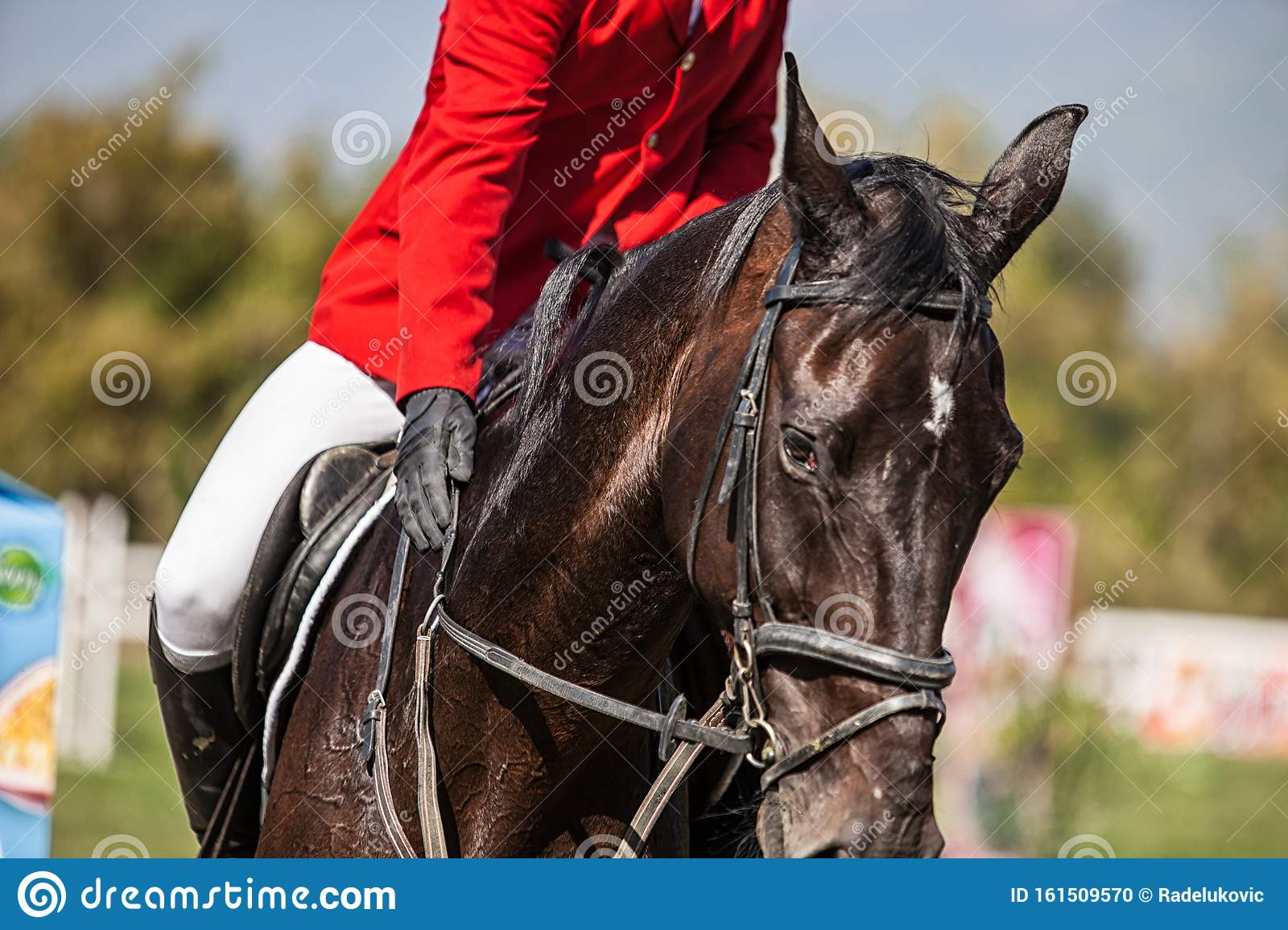 Dressage Horse And A Rider Stock Photo Image Of Industry 161509570
