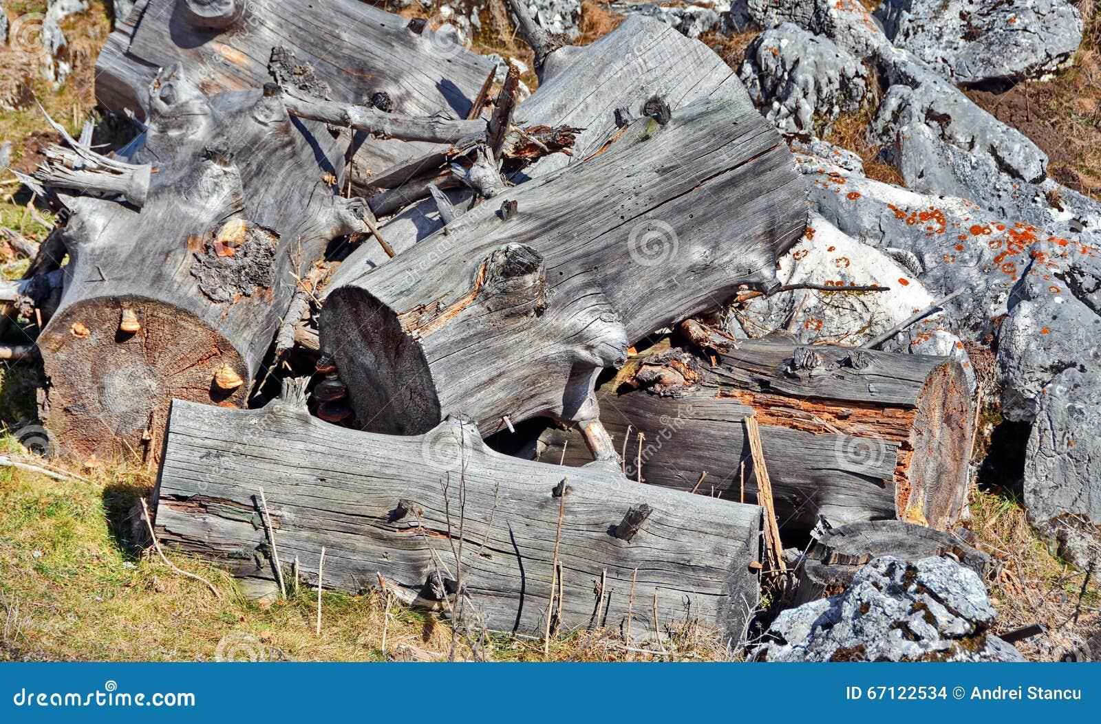 Drewna cięcie