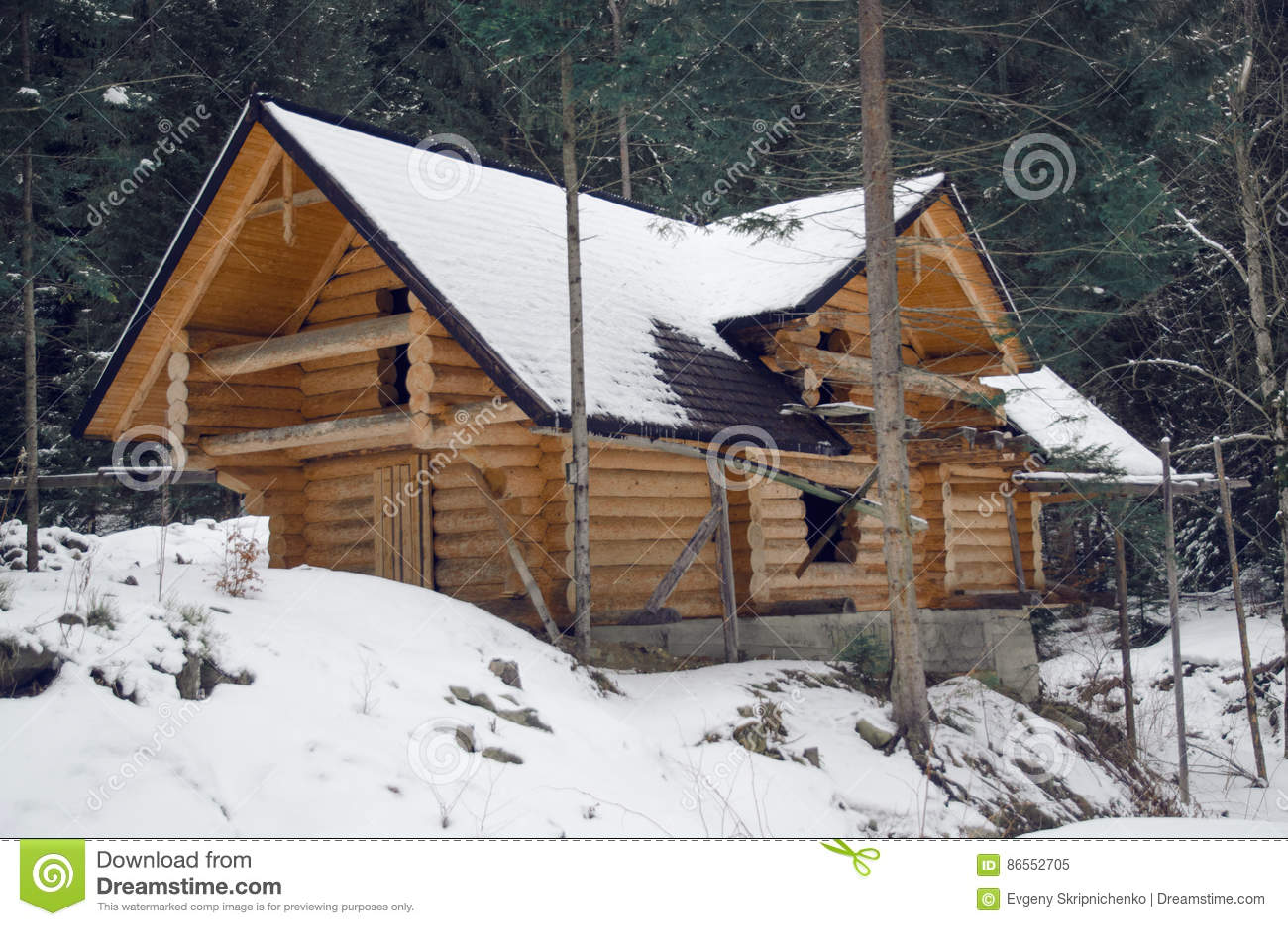 Drewniany dom w sosnowym lesie
