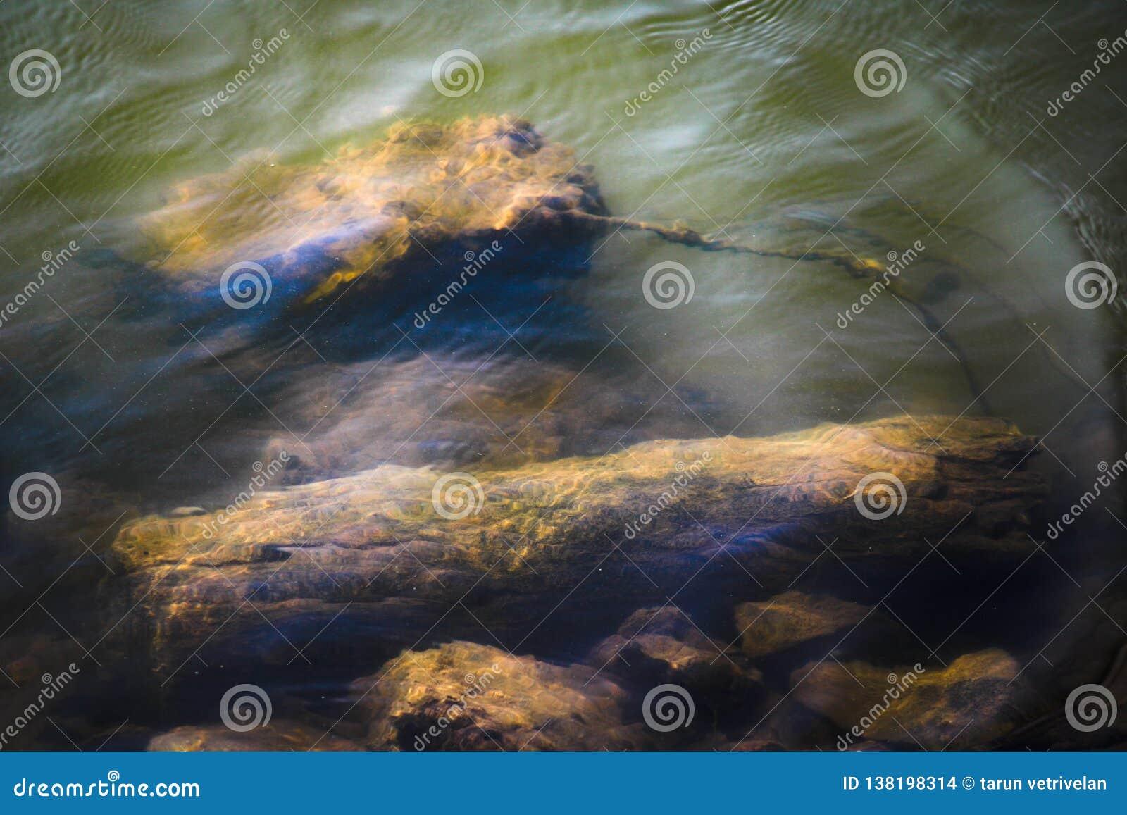 Drewniany kawałek pod morzem