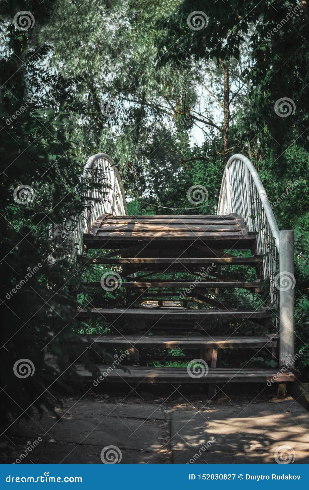 Drewniany most w lesie