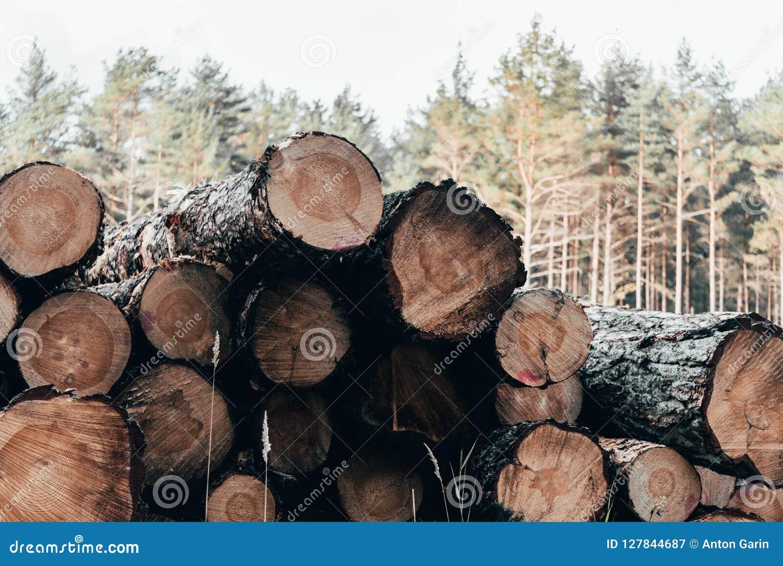 Drewniany naturalny cięcie notuje dalej jesień las