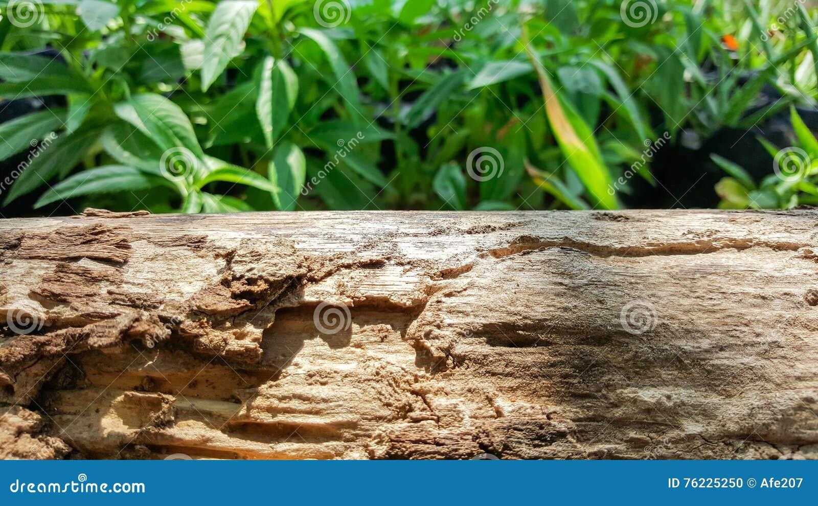 Drewno most z światłem słonecznym, zielony natury tło