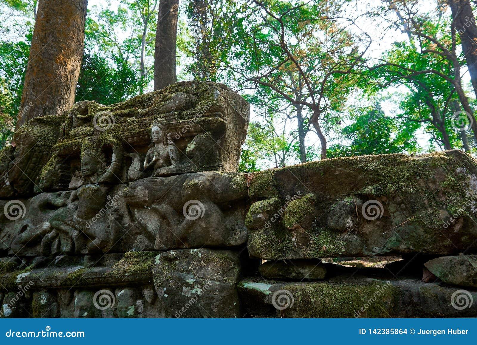Drewno w świątynnym powikłanym Angkor Wat Siem Przeprowadza żniwa, Kambodża