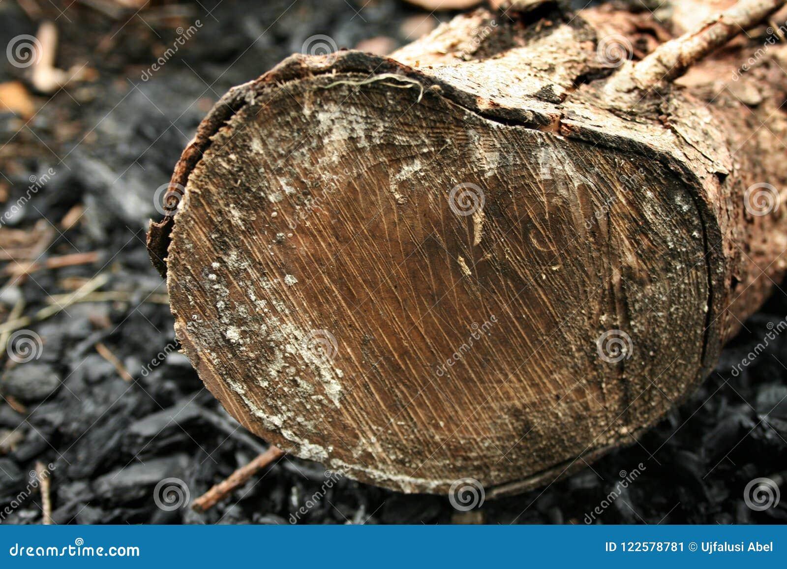 Drewno w węglu