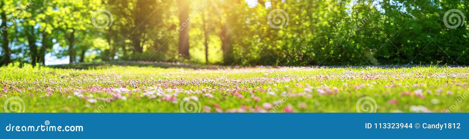 Drewno z wiosna kwiatami