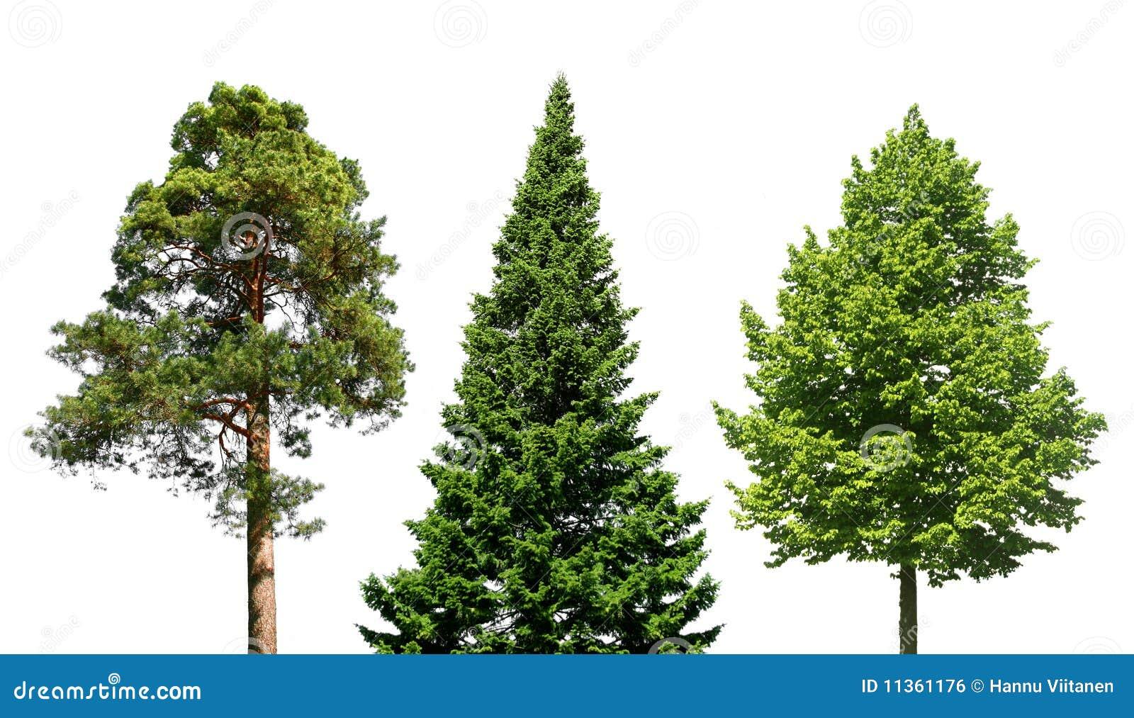 Drie bomen op wit