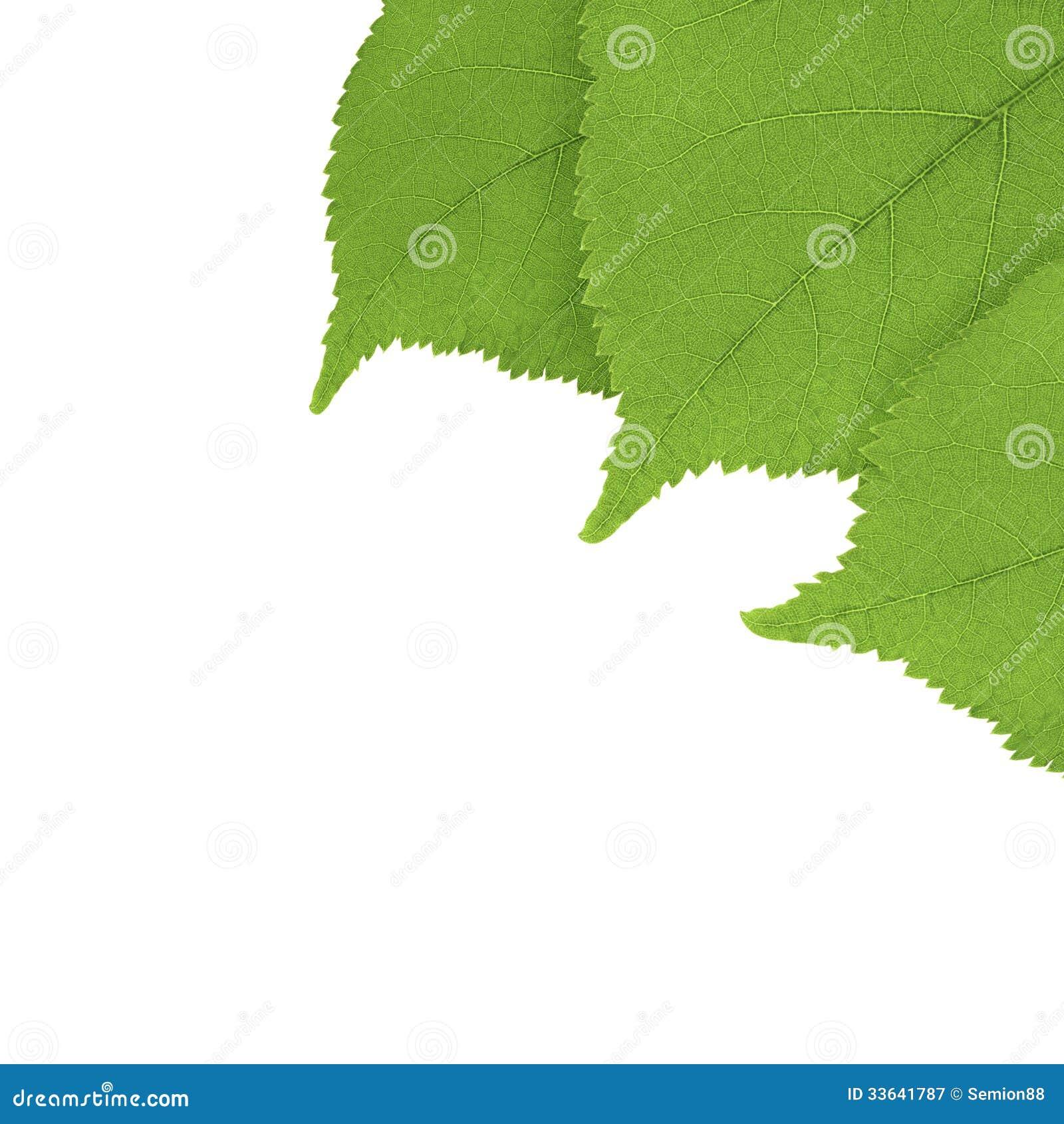 Drie groene bladeren van de de zomerlinde in de hoek van het kader stock afbeelding afbeelding - Sofa van de hoek uitstekende ...