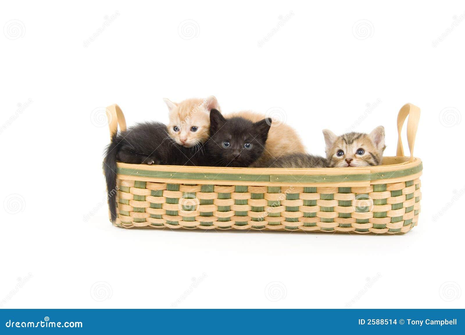 Drie katjes in een mand