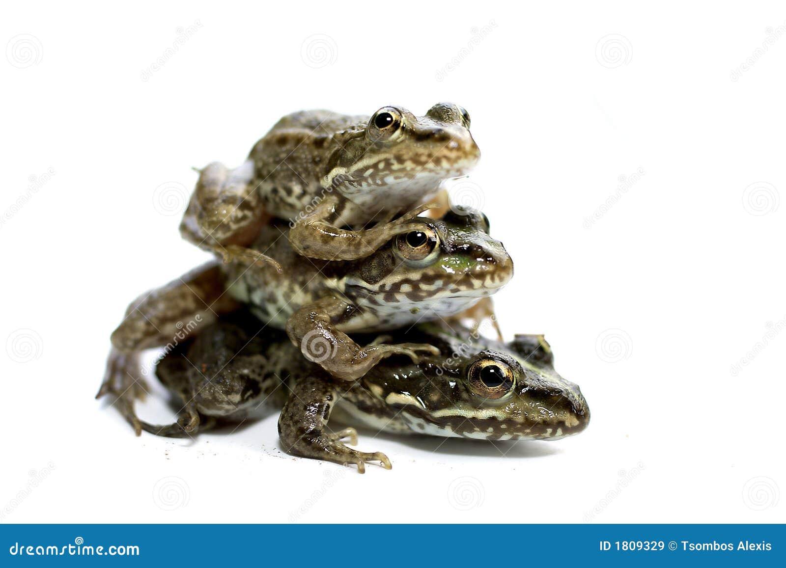 Drie kikkers