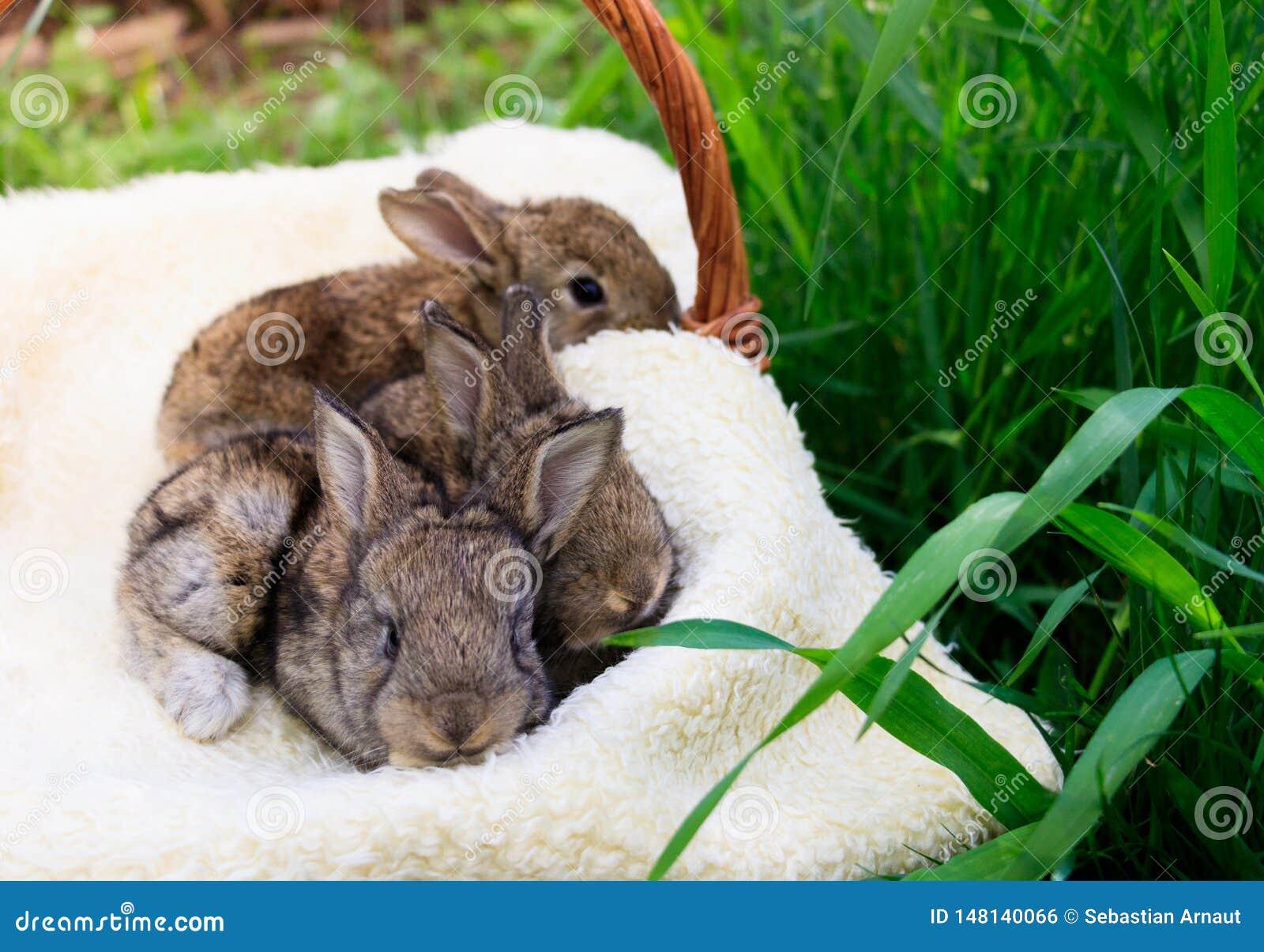 Drie kleine en mooie konijntjes