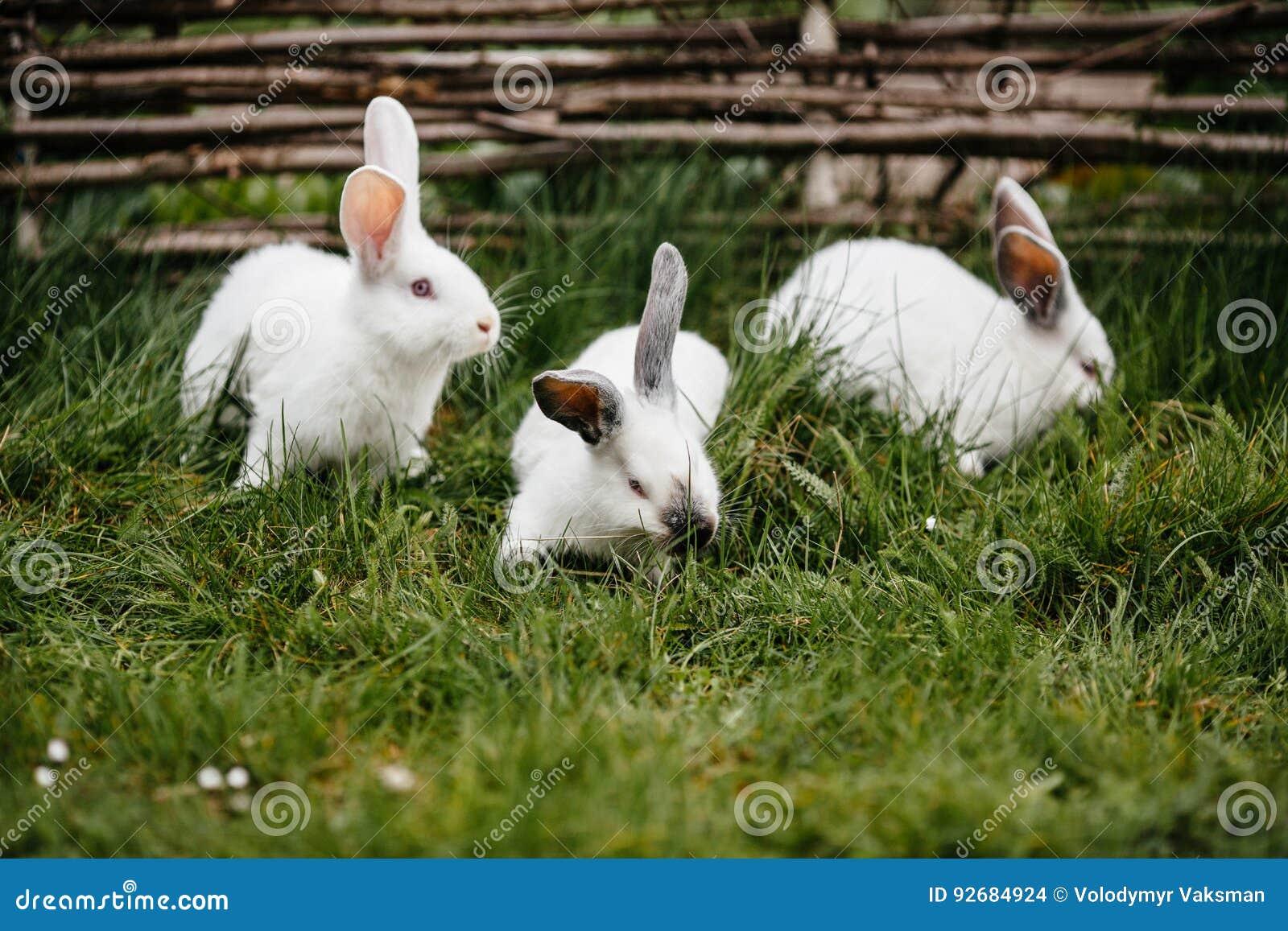 Drie konijnen in groen gras