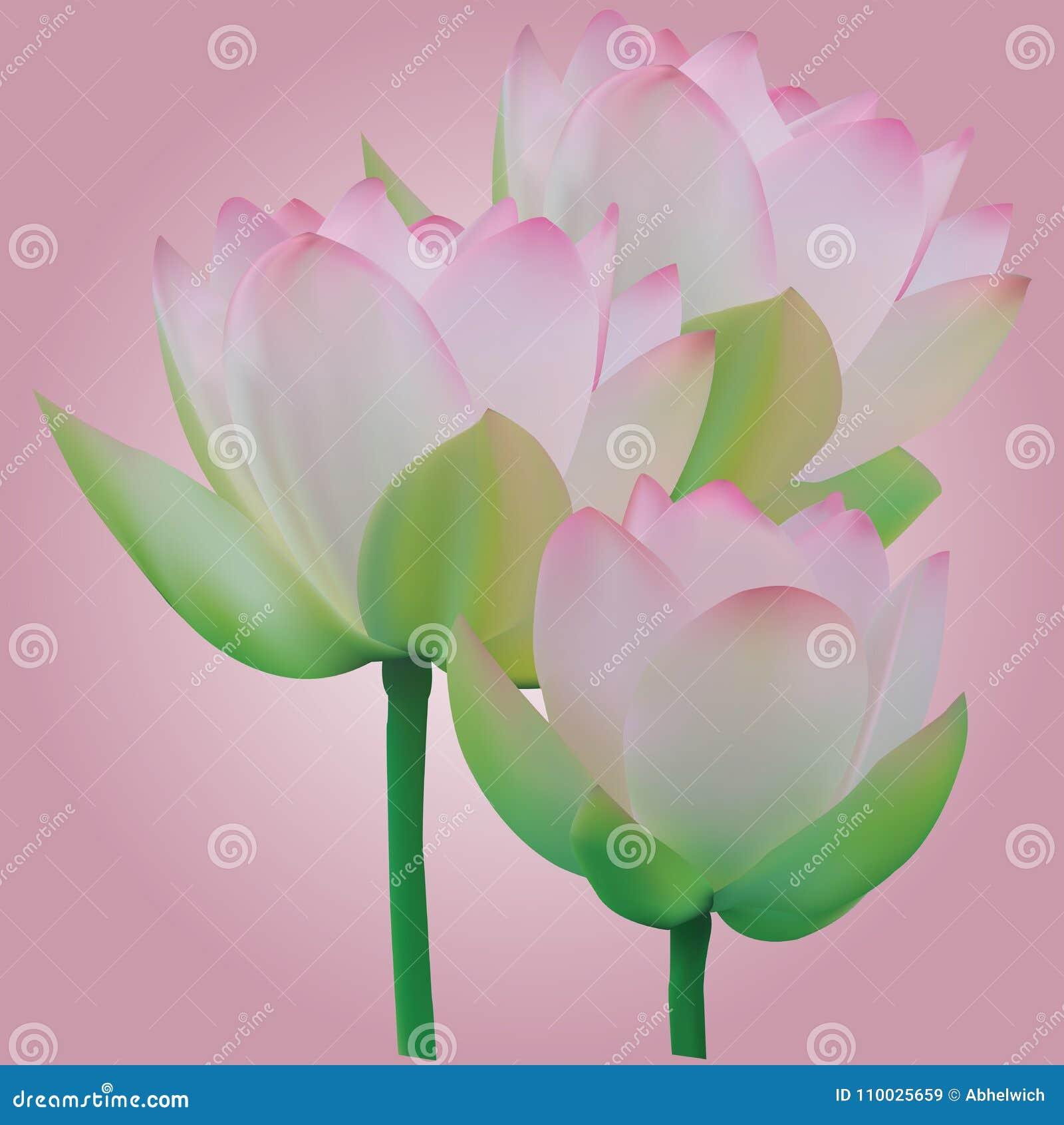 Drie lotusbloembloemen, vector met om het even welke het schrapen