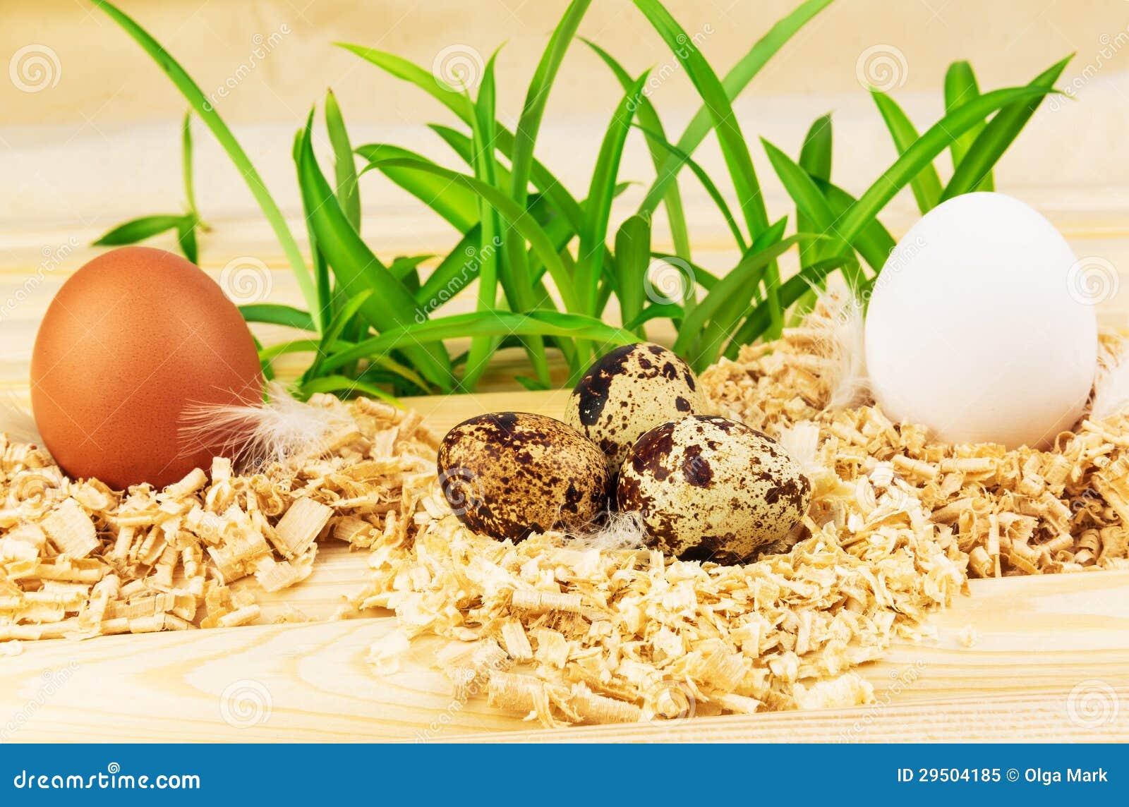 Drie nesten met verse eieren