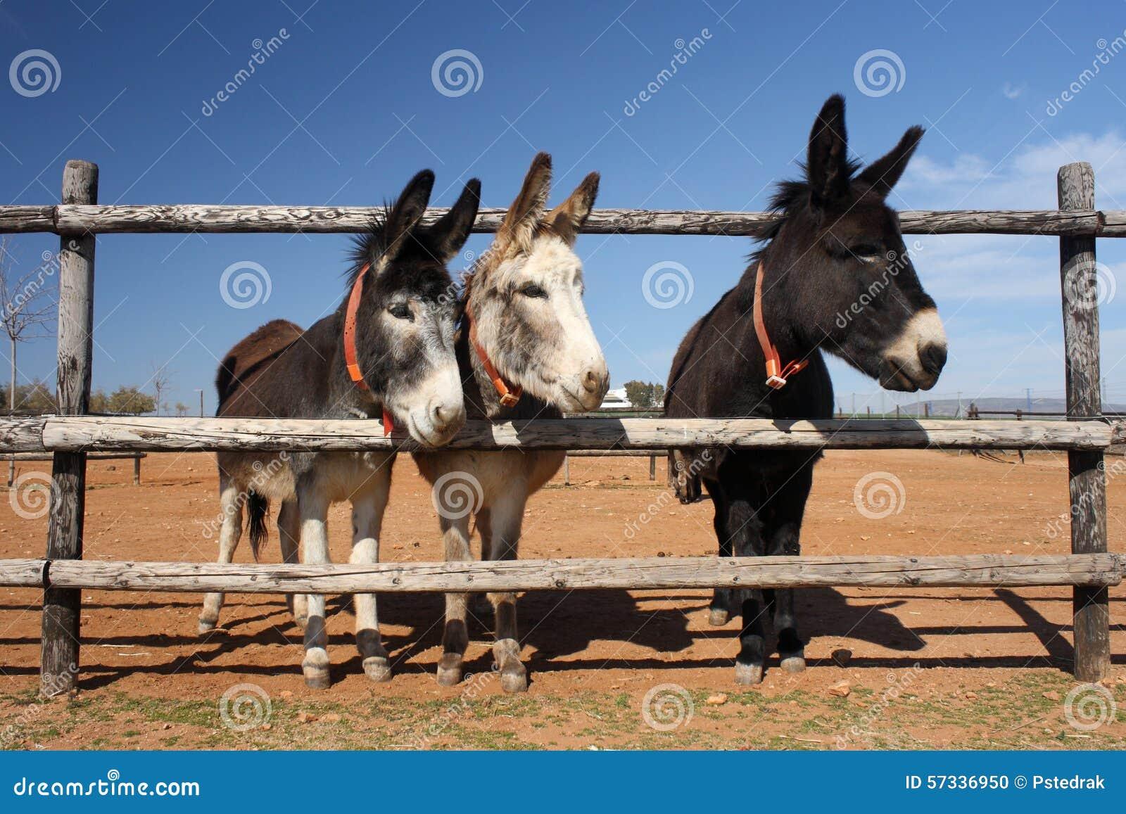 rijpe grote zwarte ezels elke sex video
