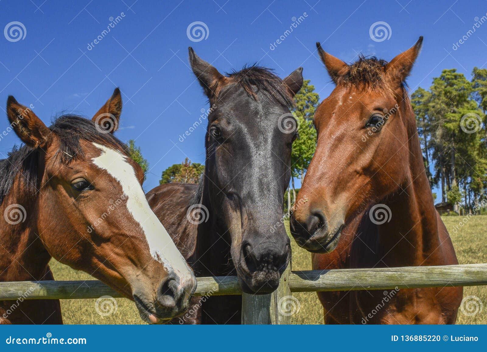Drie paarden bij de rand van de omheining