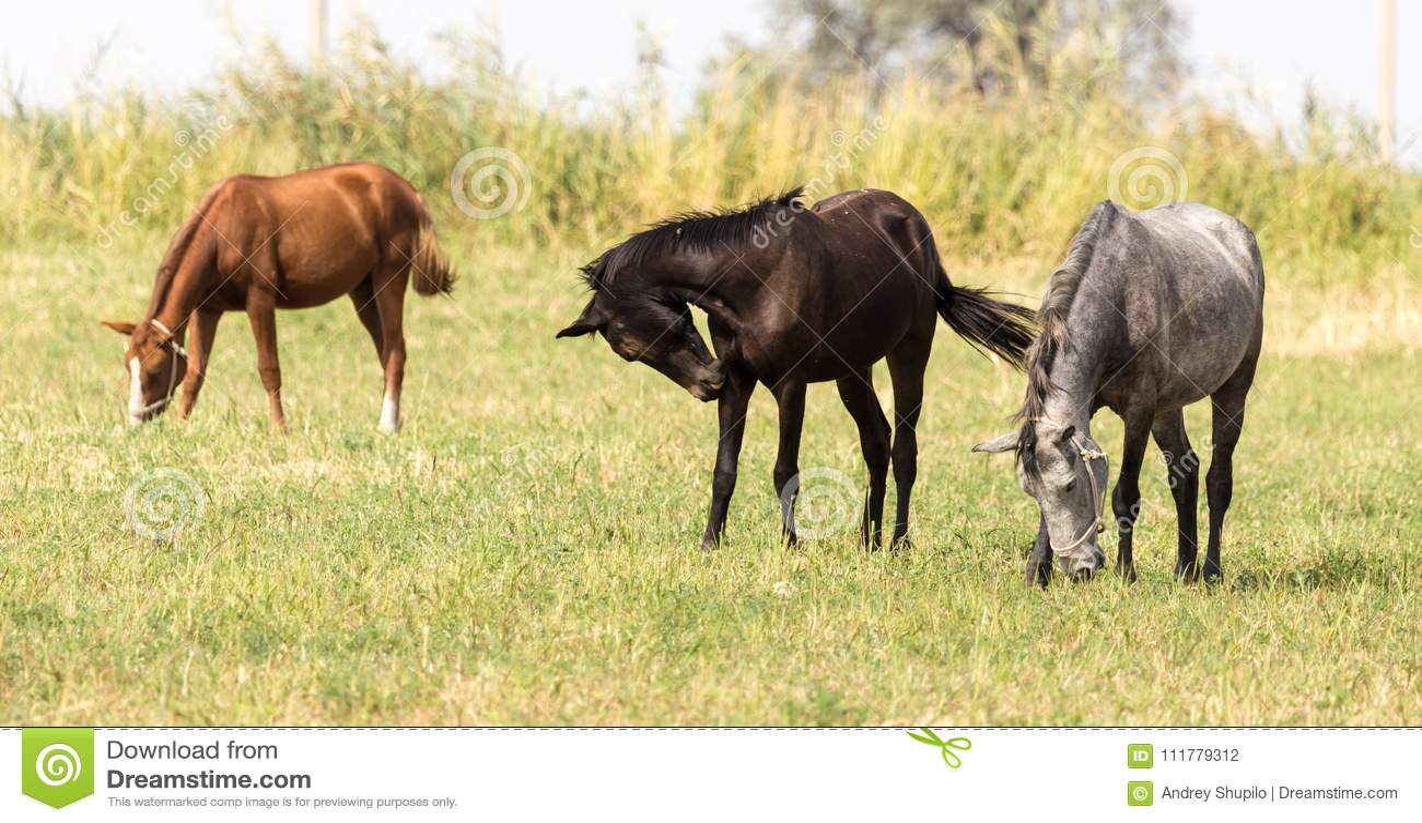 Drie paarden in een weiland in aard