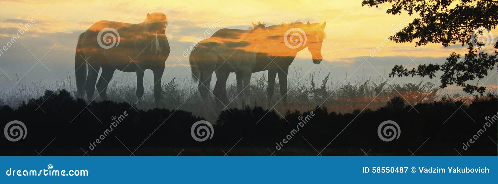 Drie paarden op een achtergrond van de dageraadhemel