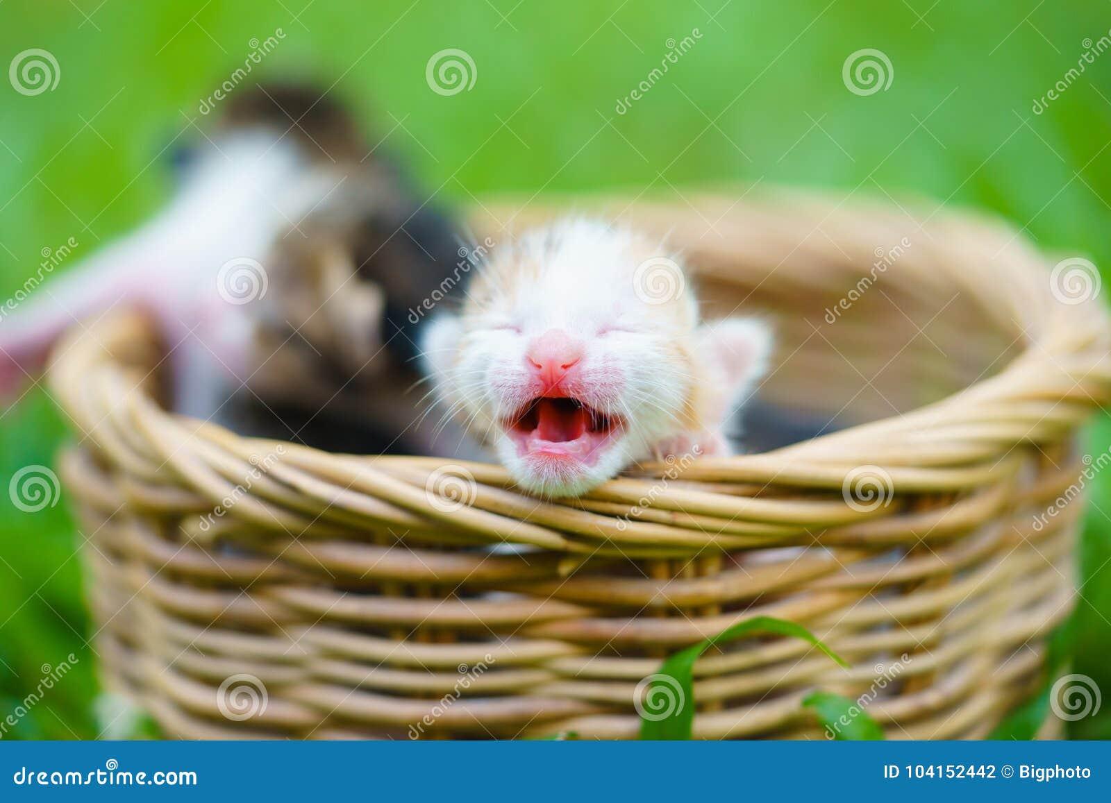 Drie pasgeboren katjes die in rieten mand op groen gras zitten