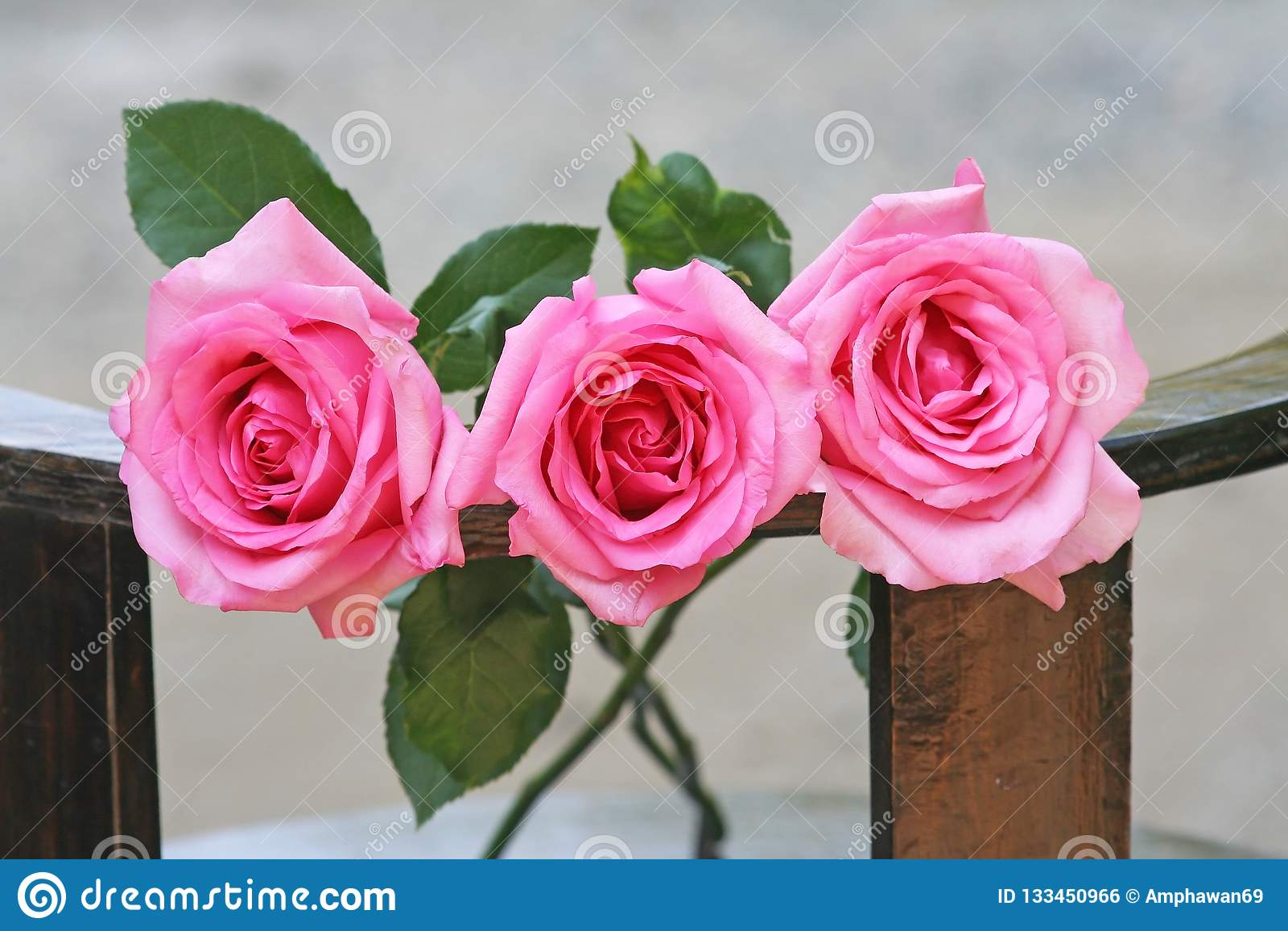 Drie roze rozenachtergrond