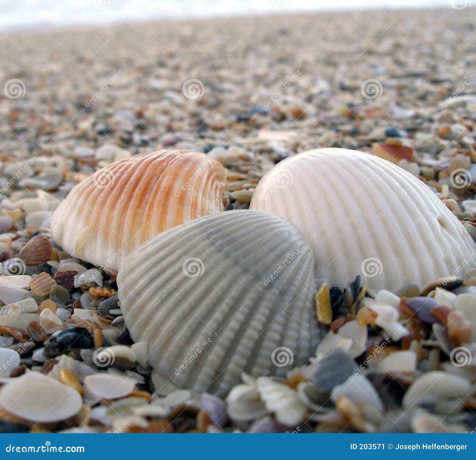 Drie Shells bij het Strand