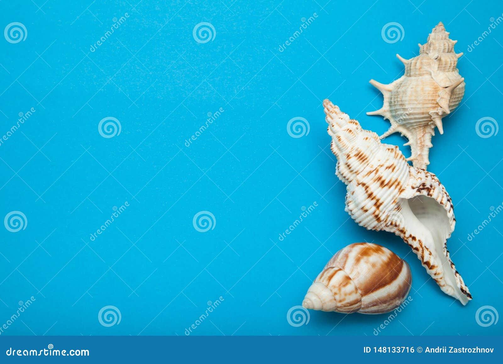 Drie shells van diverse soorten op een blauwe achtergrond Vakantieconcept, exemplaarruimte