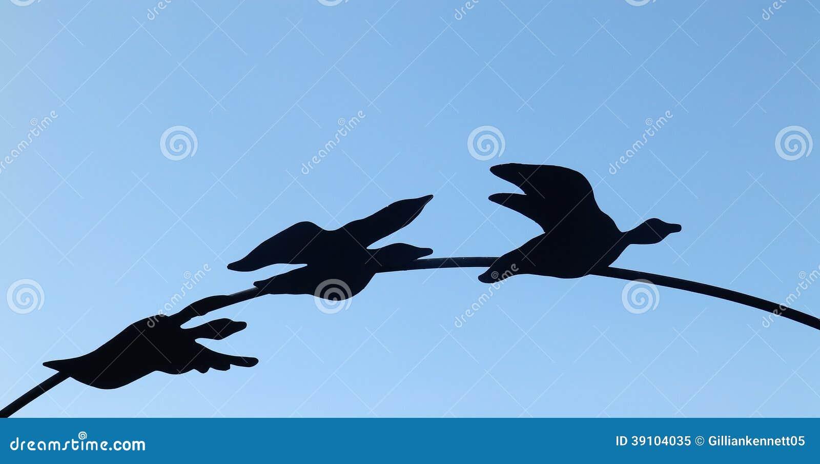 Drie zwarte eenden op boog
