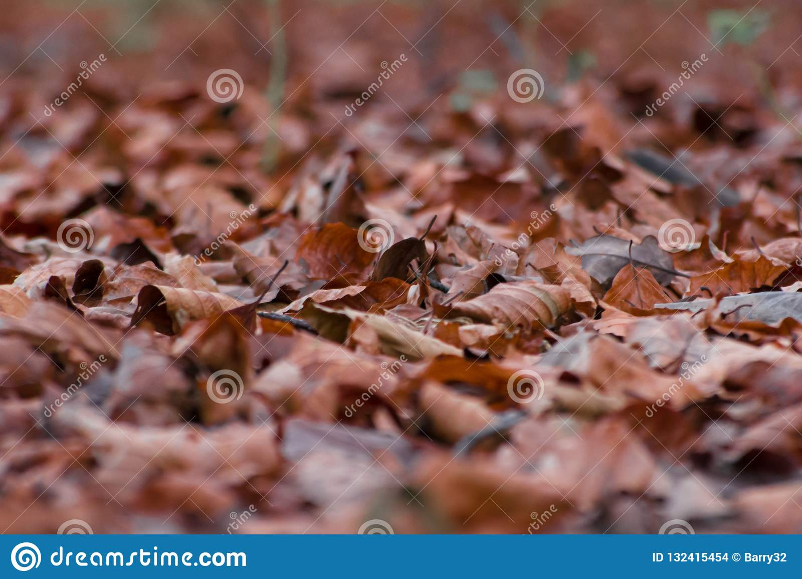 Dried brown leaves on forest floor in Autumn, shallow focus abstract