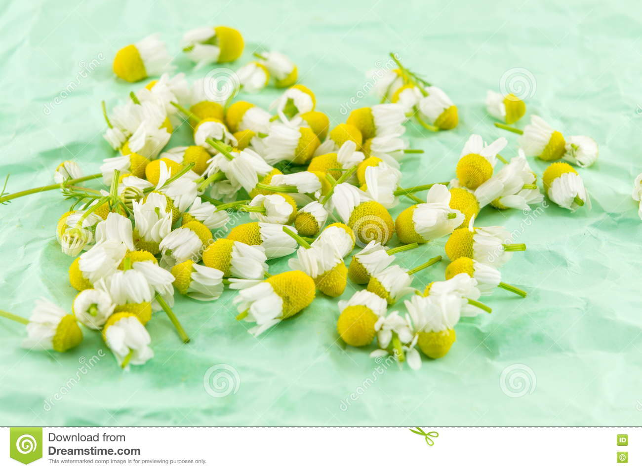 Dried chamomile flowers for making healthy tea stock photo image chamomile dried flowers healthy tea dhlflorist Gallery