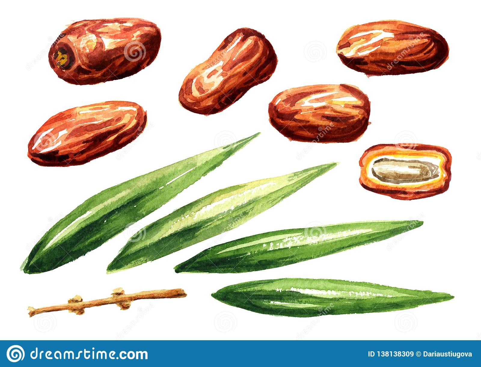 Dried date fruits and leaves elements set. Watercolor hand drawn illustration, isolated on white background