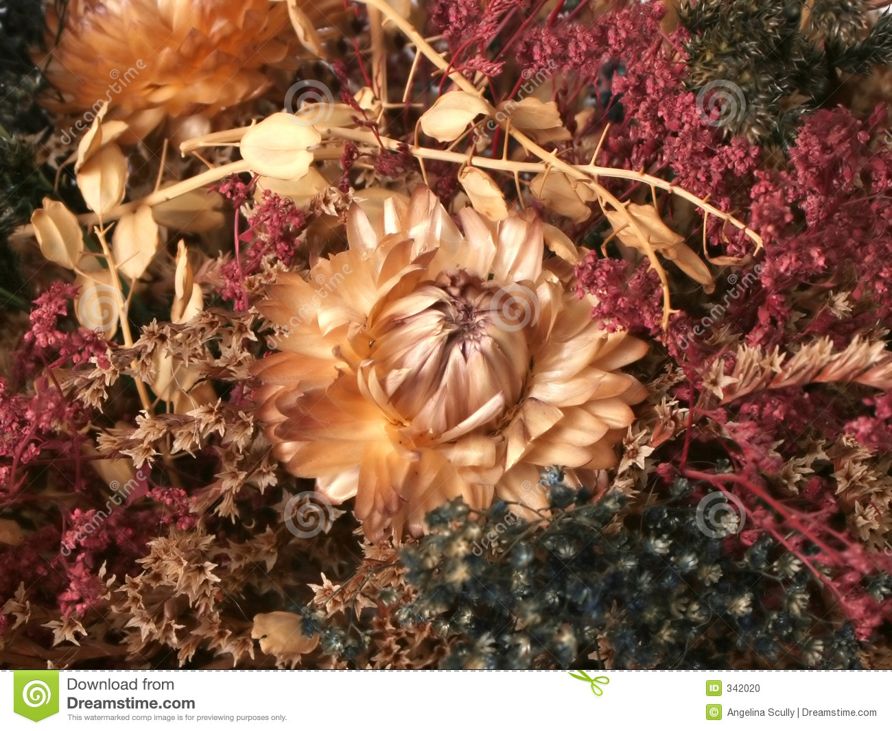 Dried Fall Flowers 3 Stock Photo Image Of Pretty Country 342020