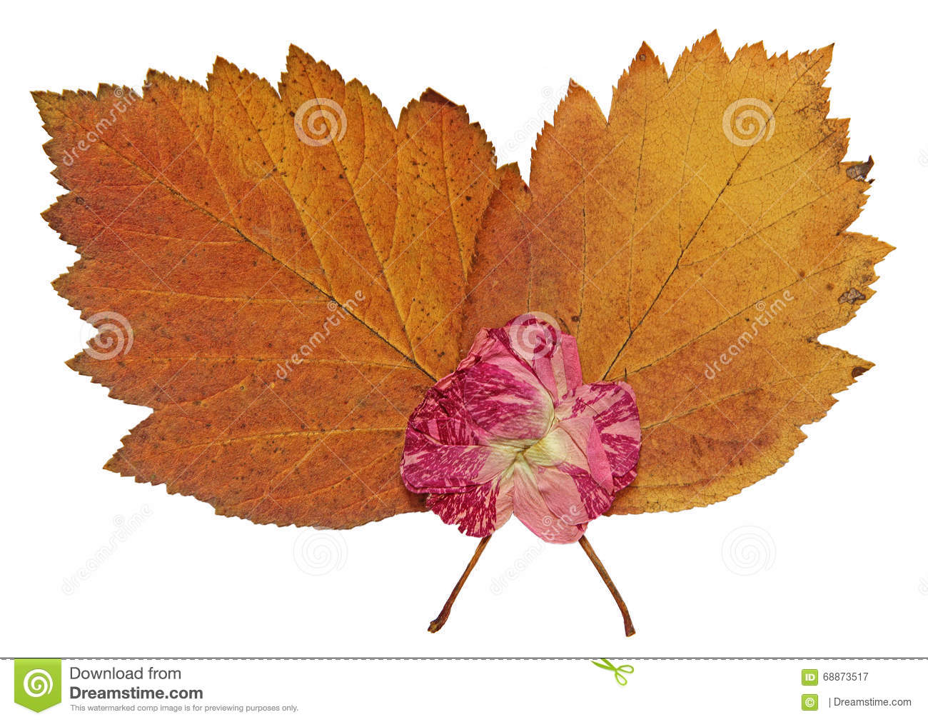 How to scrapbook dried flowers - Dried Fall Leaves Of Plants Flowers And Branches Isolated Elem